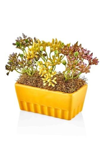The Mia Fiorina Saksılı Çiçek Sarı Sarı